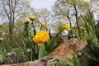 2016-04-24 Цветы