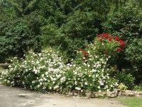 2016-06-21 Цветы preview