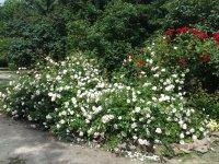 2016-06-21 Цветы
