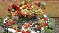 В Ивановке прошел День яблока
