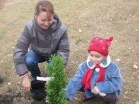Мое первое дерево  в Коптево