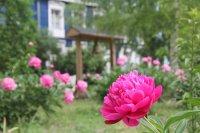 Цветы 2014 превью