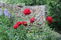 Лето 2014 цветы preview