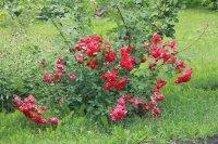 Лето 2014 цветы