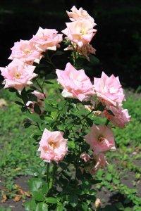 Лето 2014 цветы стоя