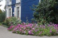 Цветы осень 2015 preview
