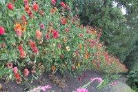 Цветы осень 2015