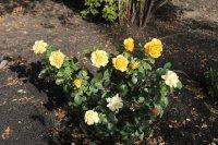 Цветы октябрь 2015 фото